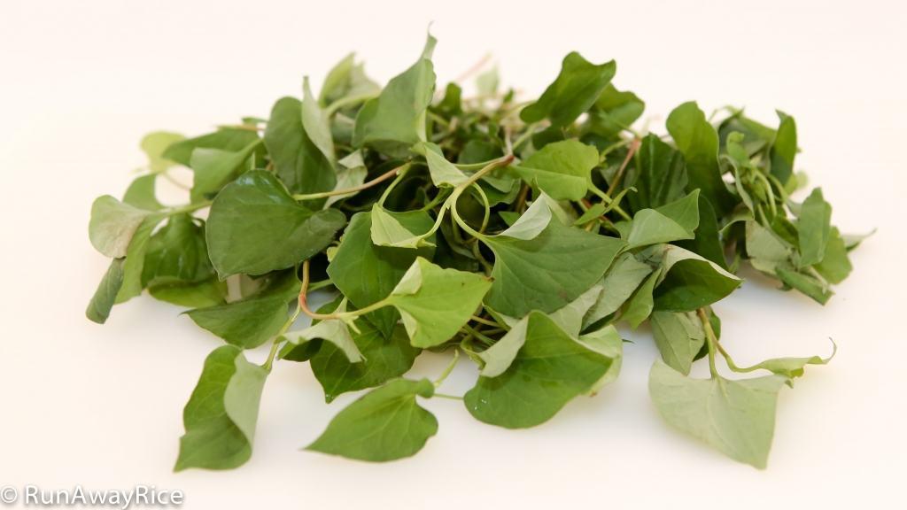 A Guide to Vietnamese Herbs: Fish Mint | runawayrice.com
