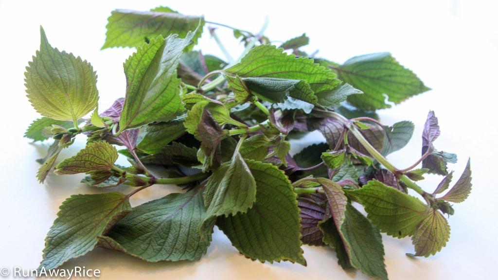 A Guide to Vietnamese Herbs: Perilla | runawayrice.com