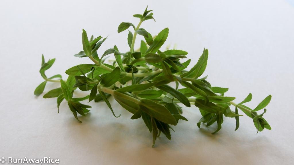 A Guide to Vietnamese Herbs: Rice Paddy | runawayrice.com
