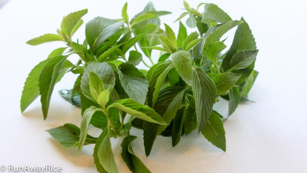 A Guide to Vietnamese Herbs: Spicy Mint | runawayrice.com