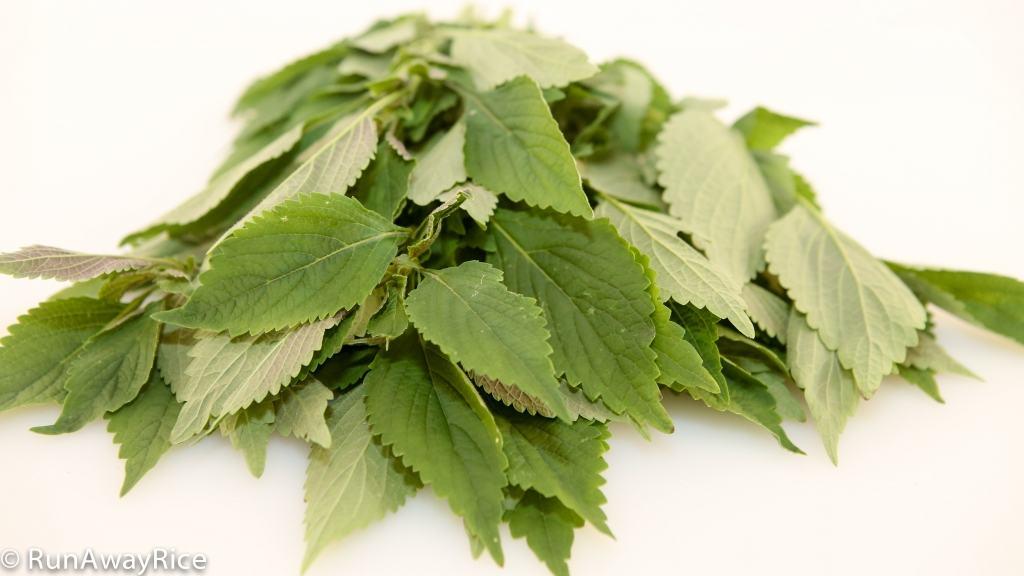 A Guide to Vietnamese Herbs: Vietnamese Balm | runawayrice.com