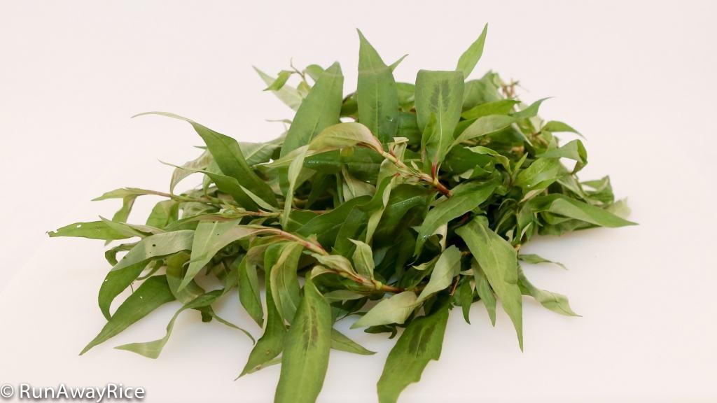 A Guide to Vietnamese Herbs: Vietnamese Coriander | runawayrice.com