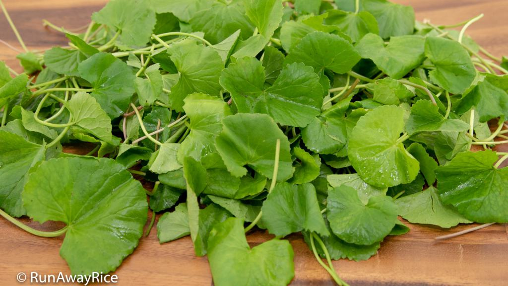 Pennywort Juice (Nuoc Rau Ma) - This Herb is Perfect for Juicing | recipe from runawayrice.com