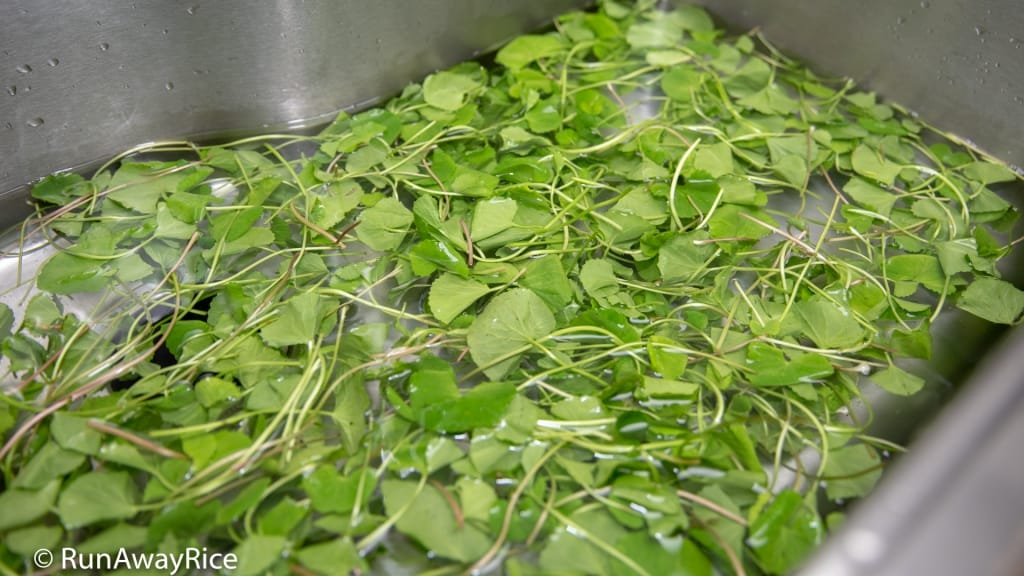 Pennywort Juice (Nuoc Rau Ma) - How to Wash Pennywort Leaves | recipe from runawayrice.com