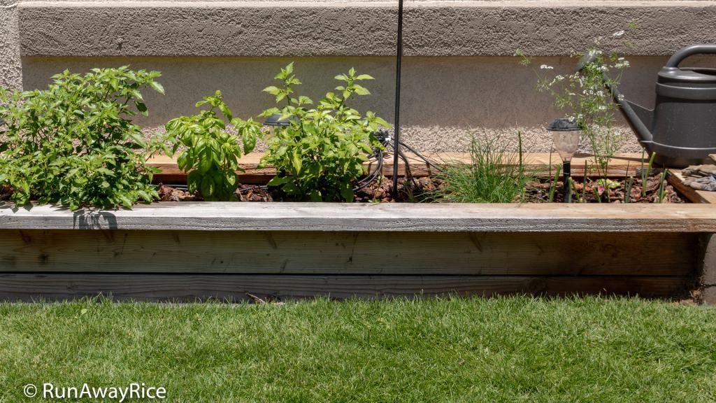 My Gardening Adventures - Planter Box Garden, The Perfect Beginner Garden   runawayrice.com