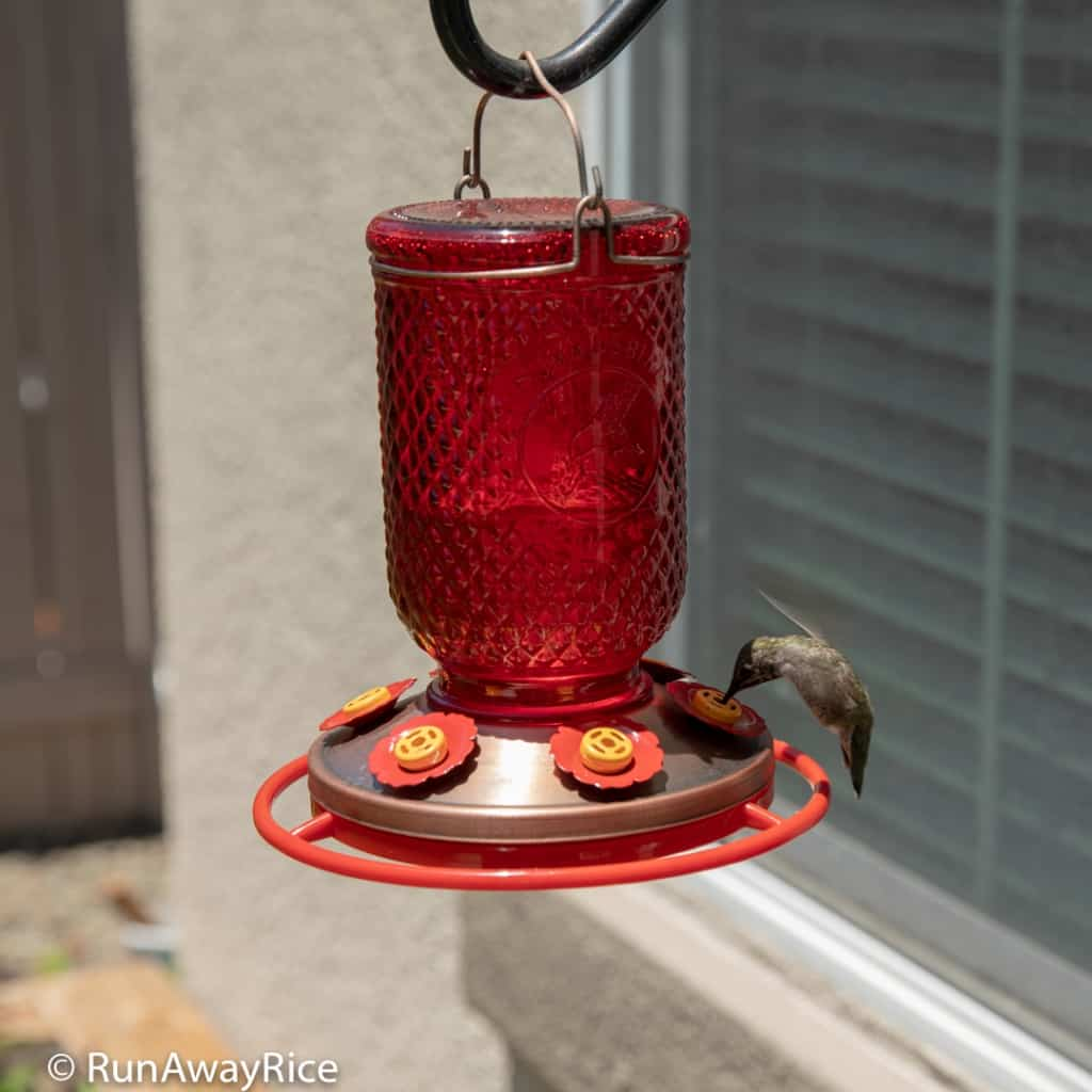 My Gardening Adventures - Homemade Nectar for the Hummingbirds | runawayrice.com