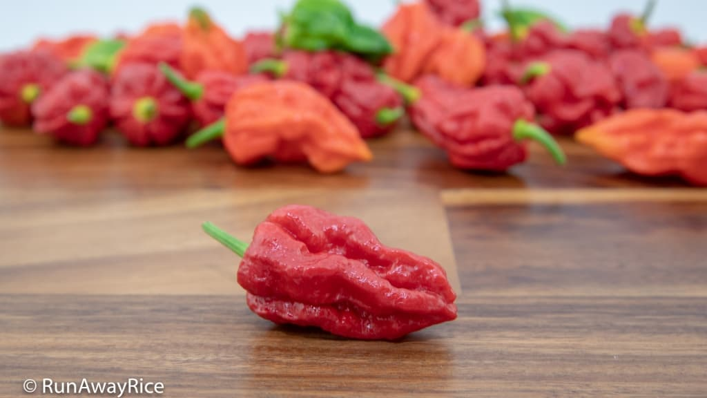 Ghost Pepper / Bhut Jolokia - Dare to Try this Pepper? | runawayrice.com