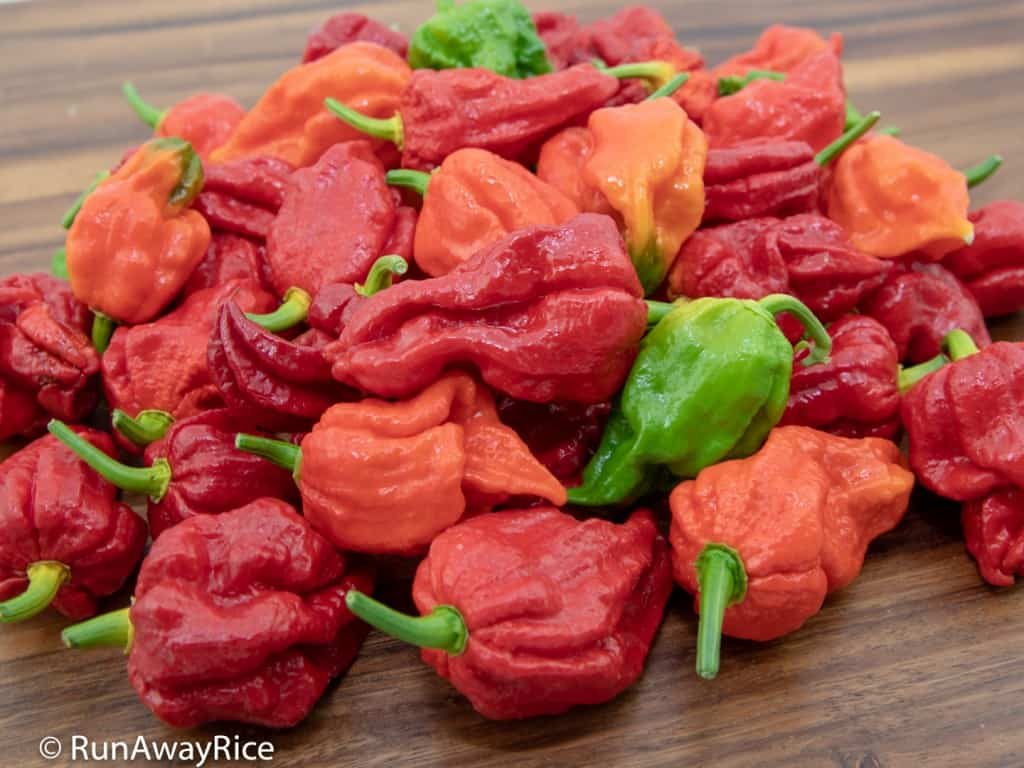 Ghost Pepper / Bhut Jolokia - Dare to Try this Hot Pepper? | runawayrice.com