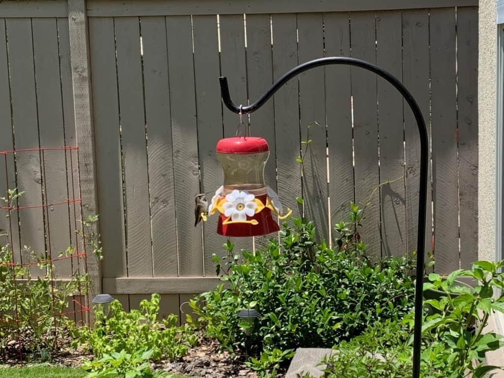 My Gardening Adventures - Summer 2019 | runawayrice.com